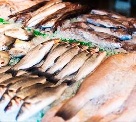 Охлажденная рыба: купить оптом